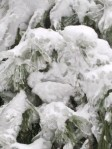 face in icy spruce tree