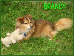our little dog Brandy