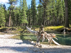 Hoodoo Trail, Banff