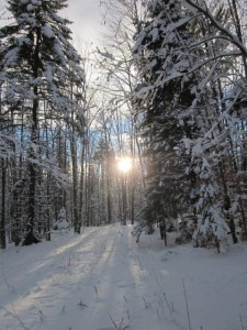setting sun in woods, Eastern Townships