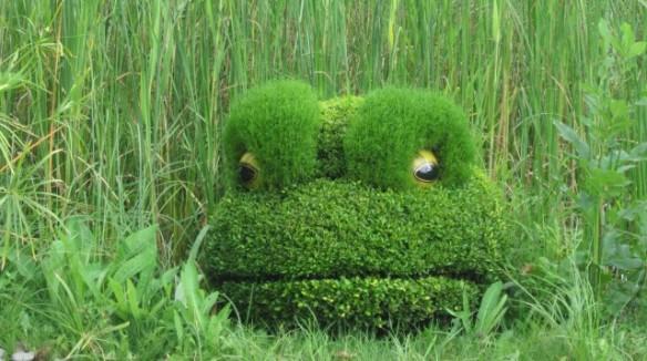 frog - Montreal Botanical Gardens