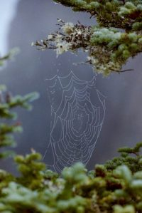 dew on spider web