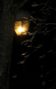 icy tree in lamplight